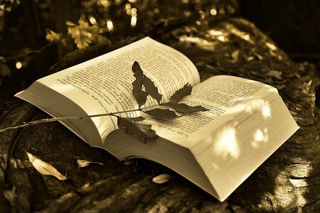 kniha v přírodě