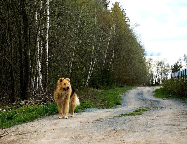velký pes
